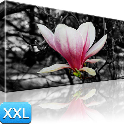 magnolie bild schwarz wei blumen wandbilder xxl 100x55 ebay. Black Bedroom Furniture Sets. Home Design Ideas
