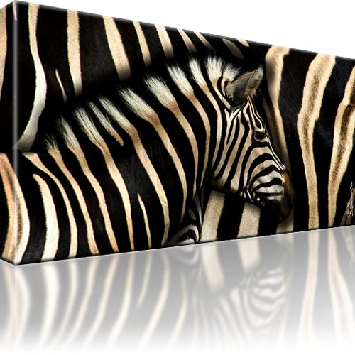 zebra afrika bild leinwand bilder wandbild tier. Black Bedroom Furniture Sets. Home Design Ideas